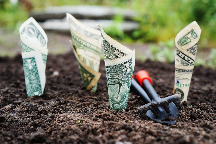 Czy inwestowanie w ziemię się opłaca?