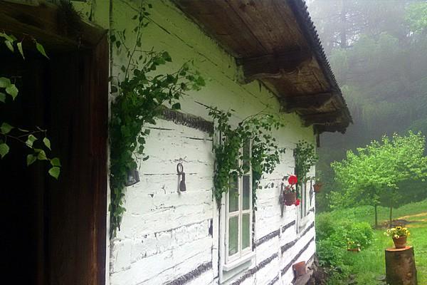 Udekorowałeś dom tatarakiem na Zielone Świątki? Jest to nie tylko piękne, ale także użyteczne: o tym mówi tradycja
