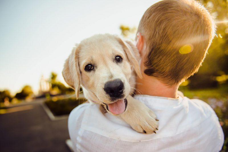 Podatek od psa: czym on jest i ile płacą właściciele czworonogów w Polsce